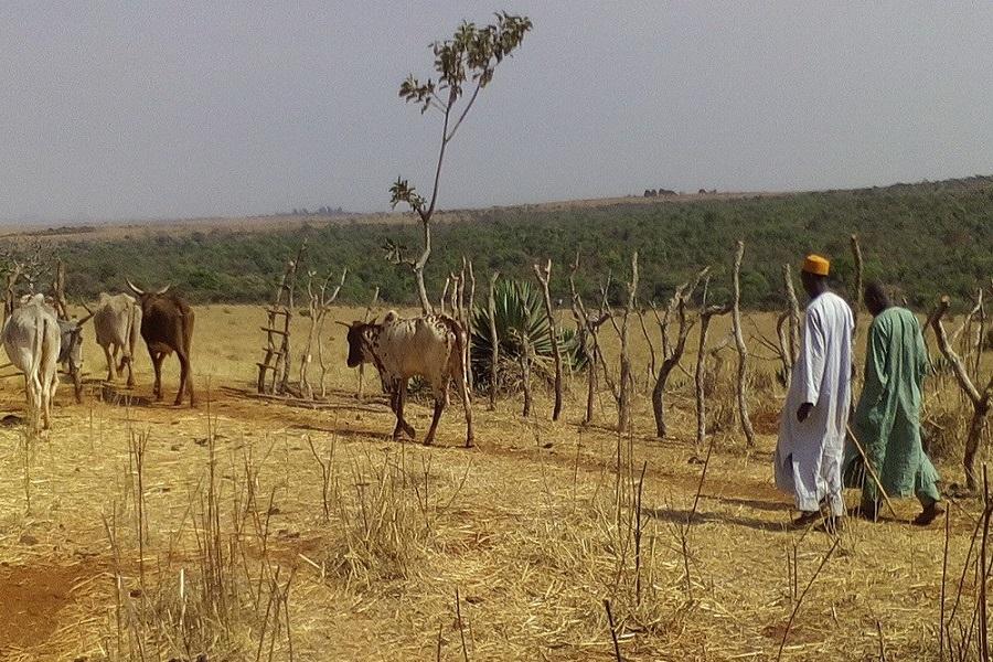 Cameroun : le gouvernement lance une riposte contre la prise d'otage dans l'Adamaoua