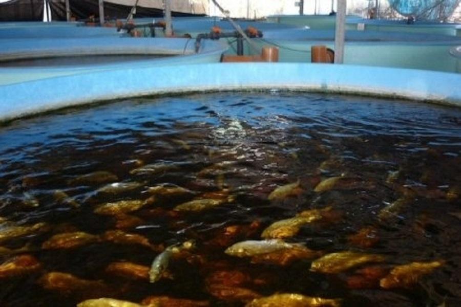 Cameroun: l'aquaculture au centre des réflexions