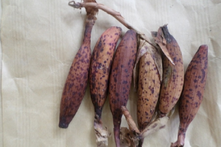 Cameroun-art culinaire : une épice qui en vaut une autre