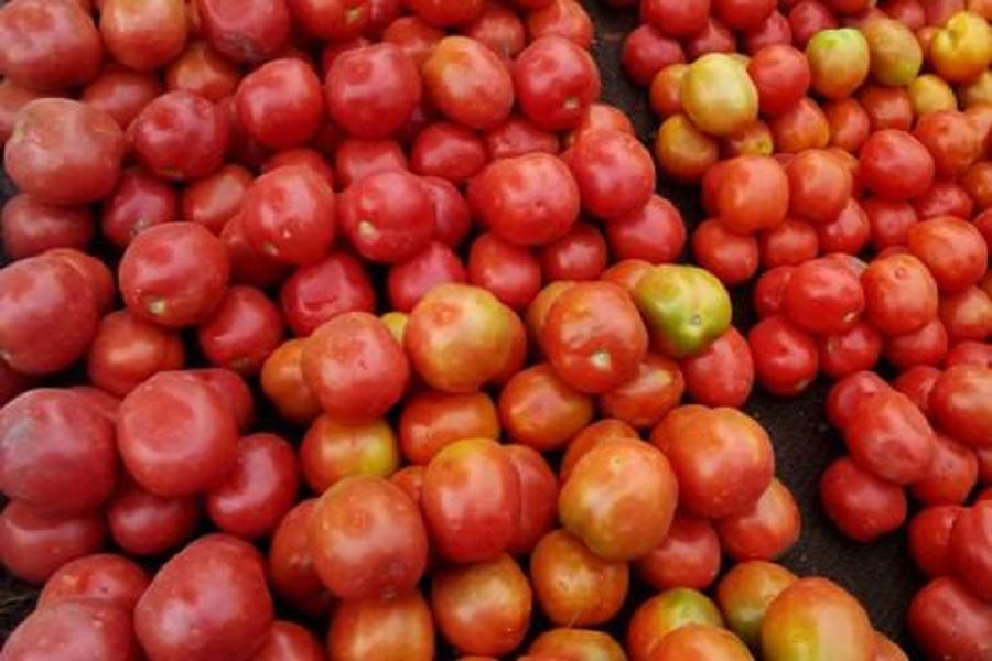 Agriculture : les prix de la tomate grimpent dans le grand-nord